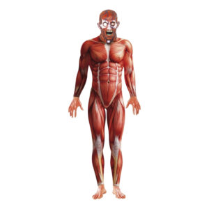 Anatomisk Man Maskeraddräkt - Medium